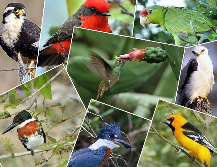 Rio Grande Valley Birding Festival cover