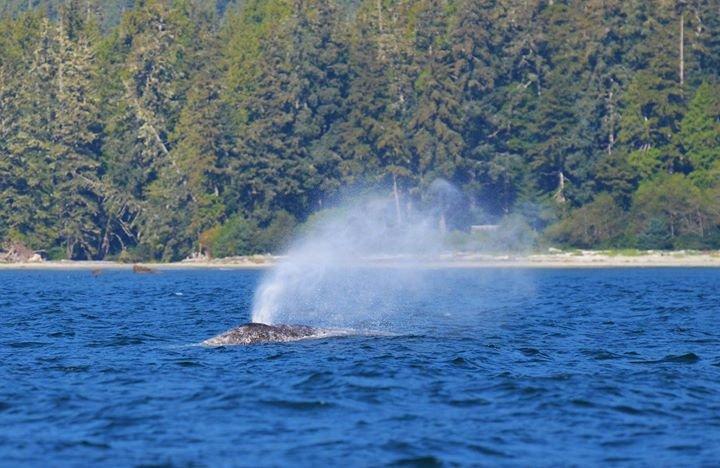 British Columbia Marine Science cover