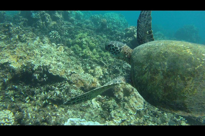 Maui Marine Life cover