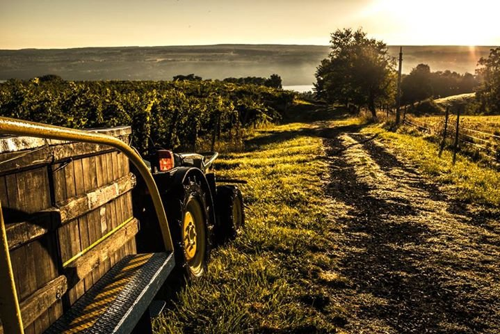 Fulkerson Winery cover