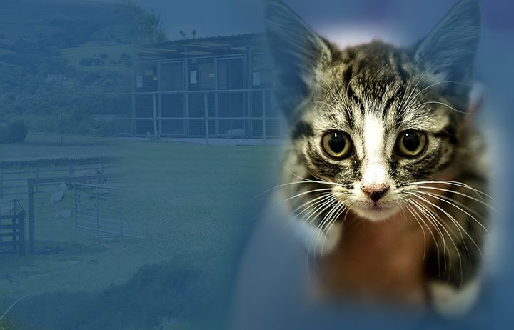 Bleakholt Animal Sanctuary cover