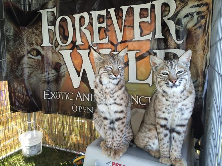 Forever Wild Exotic Animal Sanctuary cover