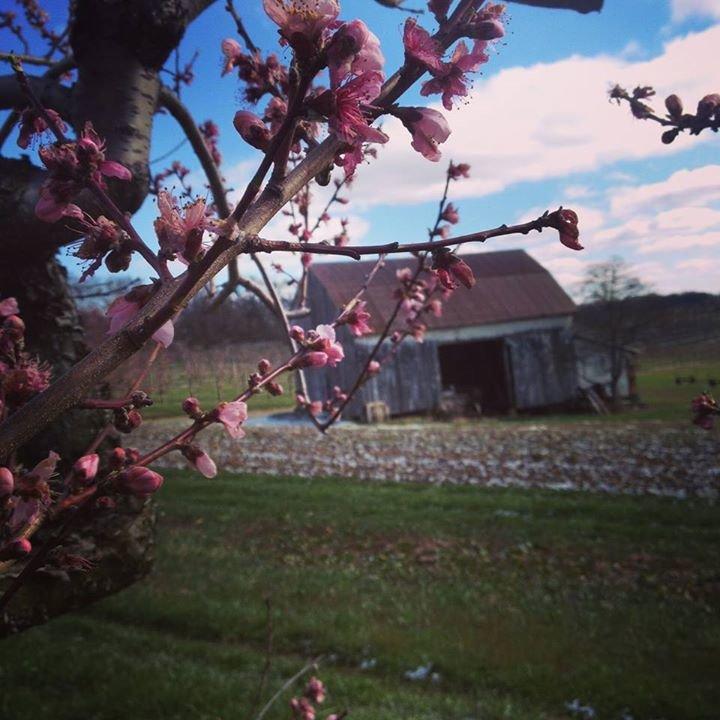 Shenot Farm cover