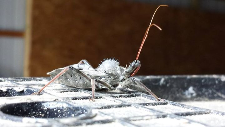 Central Termite & Pest Control cover