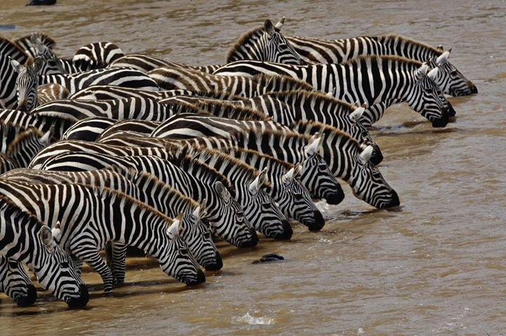 Safari LINKS Africa cover