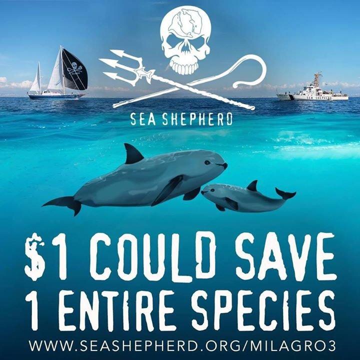 Sea Shepherd Seattle cover