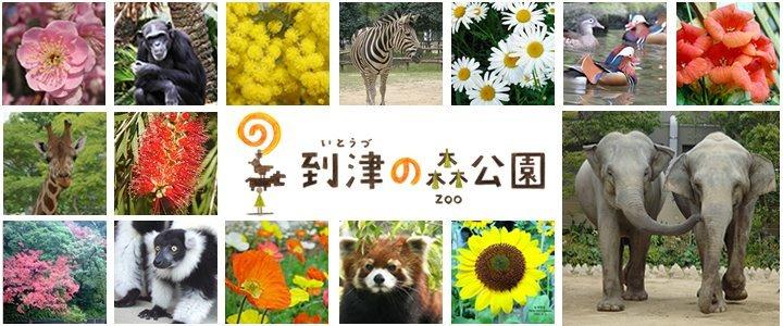 到津の森公園 cover
