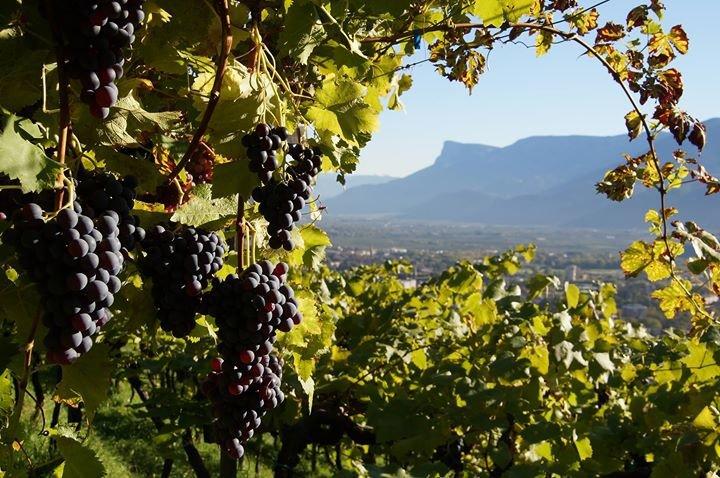 Dorf Tirol - Tirolo cover