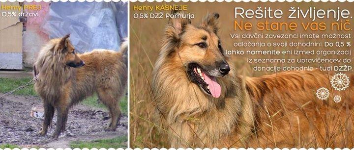 Društvo za zaščito živali Pomurja cover