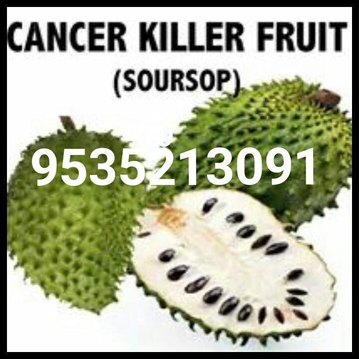 Soursop Graviola ramaphalam cancer curing fruit - Bangalore, India