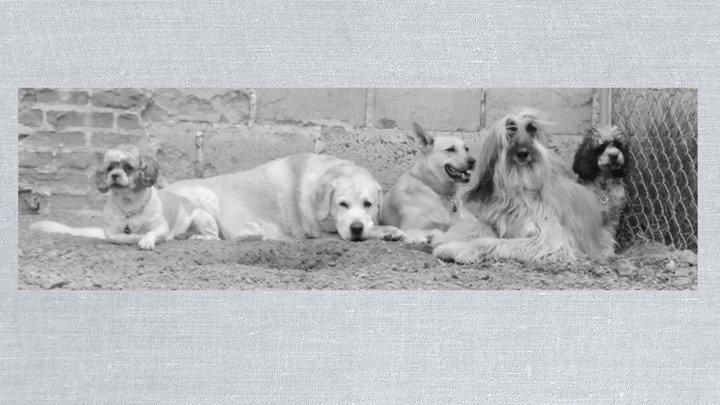 WOKIS park Dog Fit Center cover