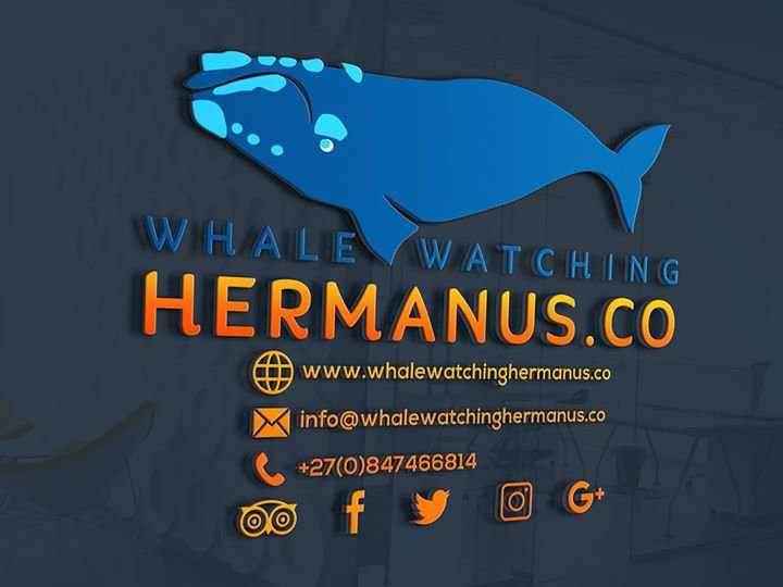 Whale Watching Hermanus cover