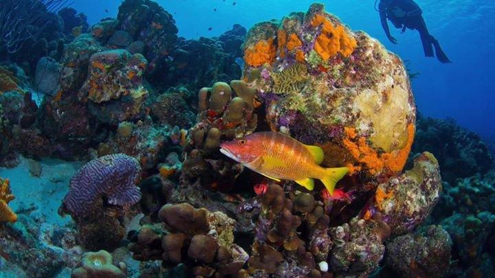 Courtyard by Marriott Bonaire Dive Resort cover