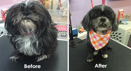 Dog Grooming Calgary cover