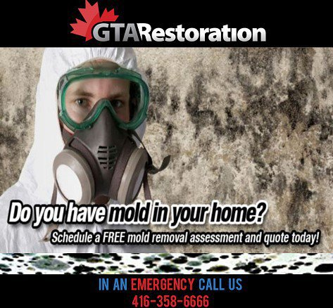 Plumbing Emergency Plumber | Water / Flood Cleanup | Mold Removal Toronto cover