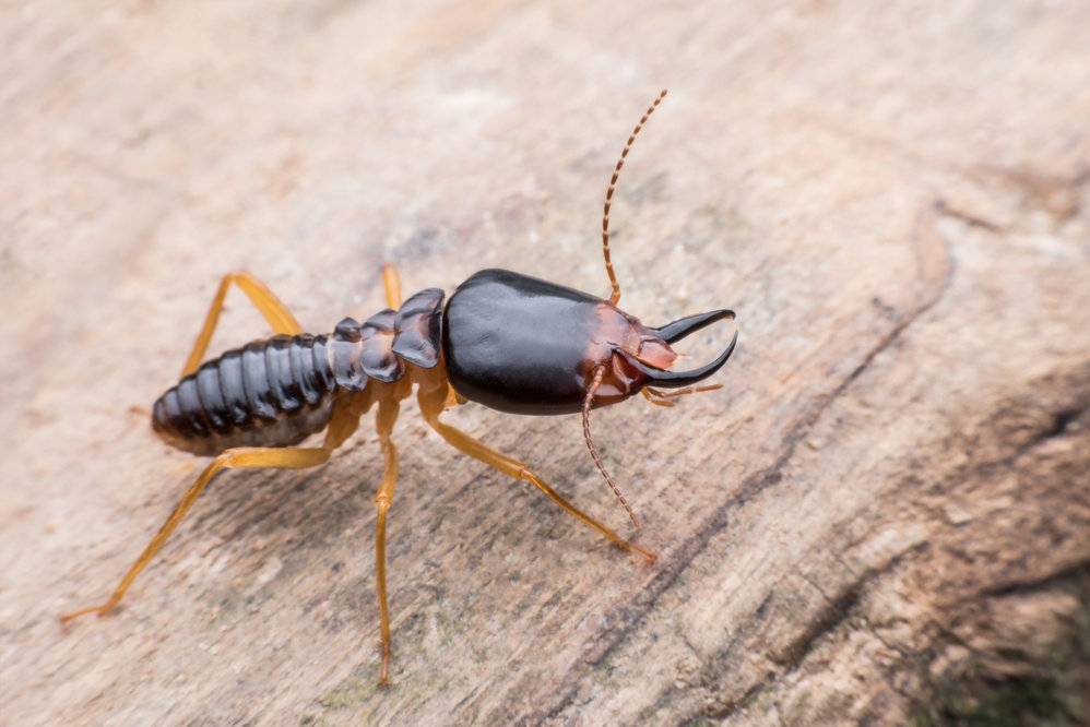 Extreme Termite and Pest Control cover
