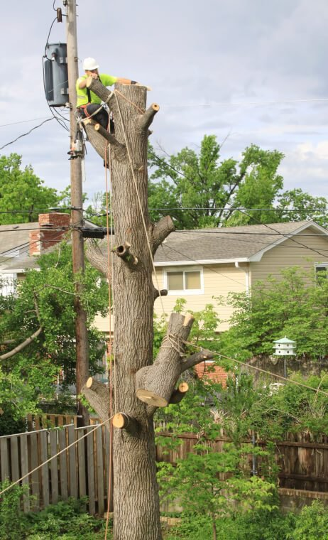 Carolina Tree Pros cover