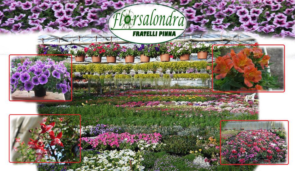 Vivaio Alghero Florsalondra (Fratelli Pinna) cover