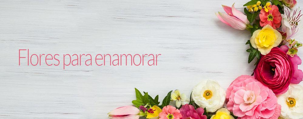 Florerías Santiago  cover