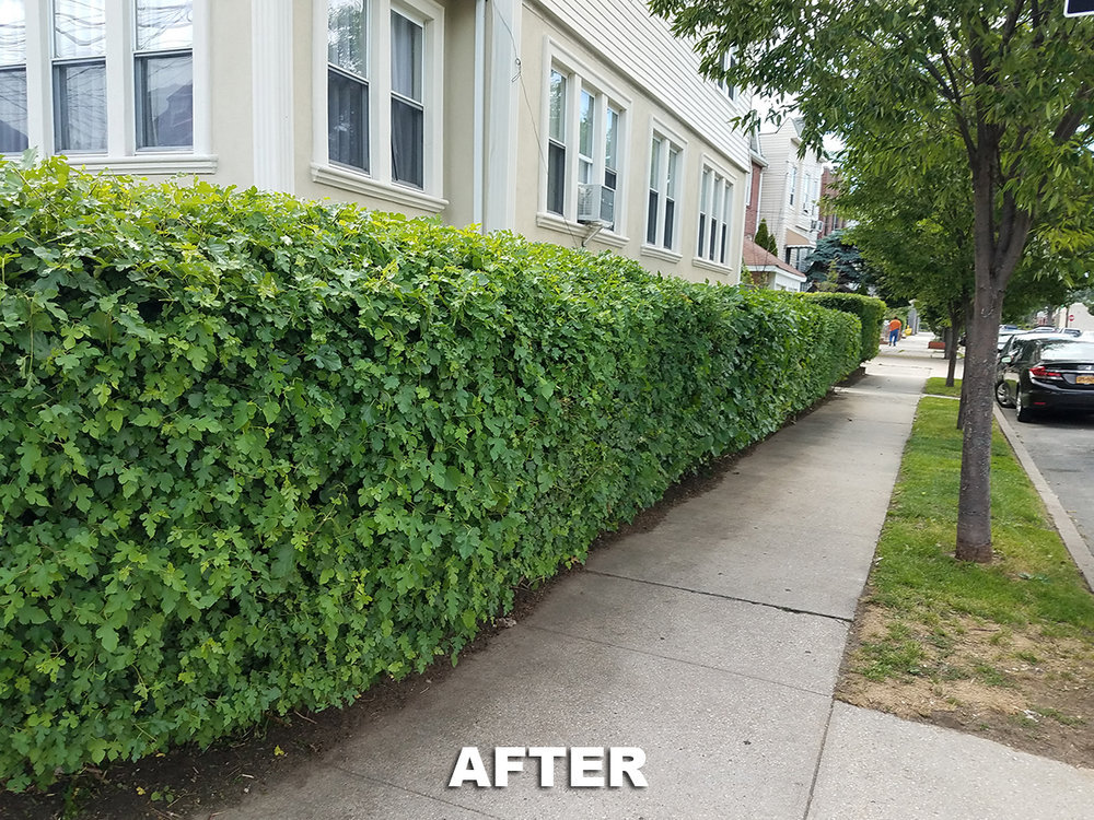 Tree Service & Removal cover