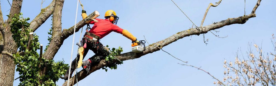 Georgia Tree Company - Tree Removal Services Cumming cover