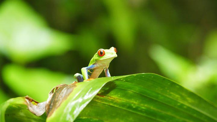 Costa Rica Vakantie cover
