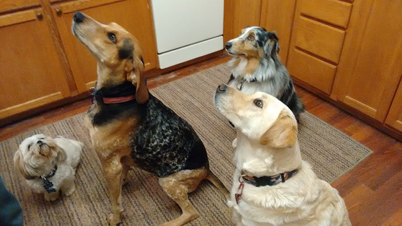 Four Paws Dog Resort cover