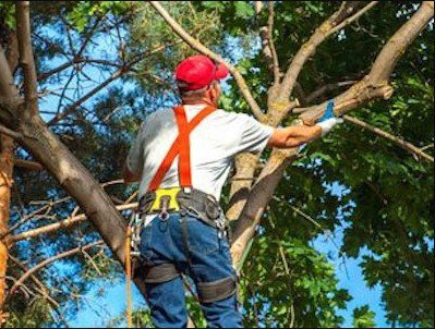 Mentor Tree Service cover