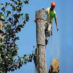 Tree Service Dayton OH cover