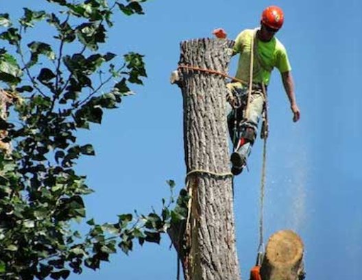 Eugene Tree Service cover
