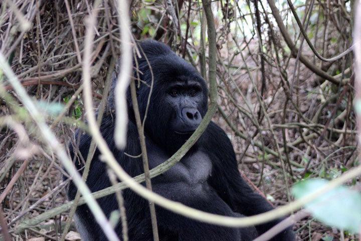 Duiker Safaris UG cover