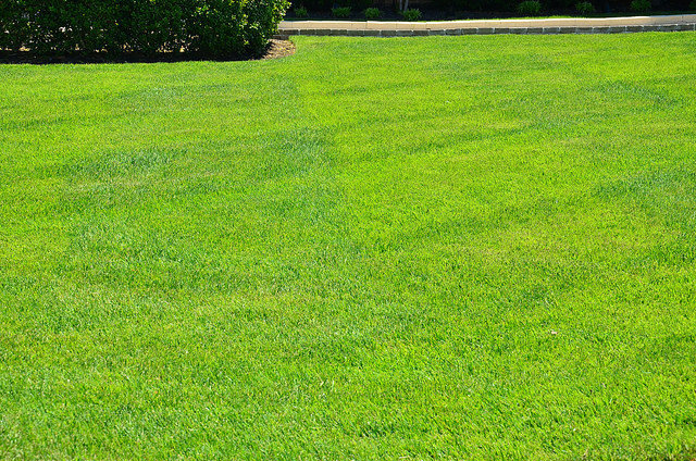GreenPal Lawn Care of Indianapolis cover