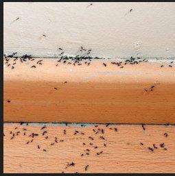 Mitchell Pest Services - Arlington VA cover