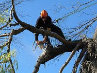 Winston-Salem Tree Service cover