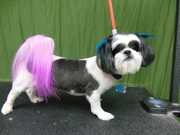 Sweetie Pooch Pet Parlor cover
