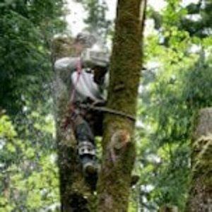 Ocala Tree Service cover