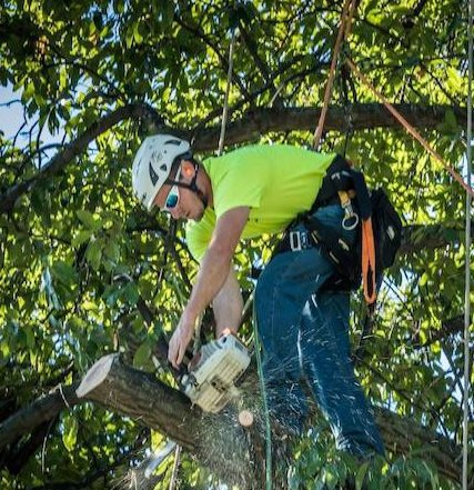 Cedar Rapids Tree Service cover