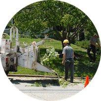 Lake Charles Tree Service cover
