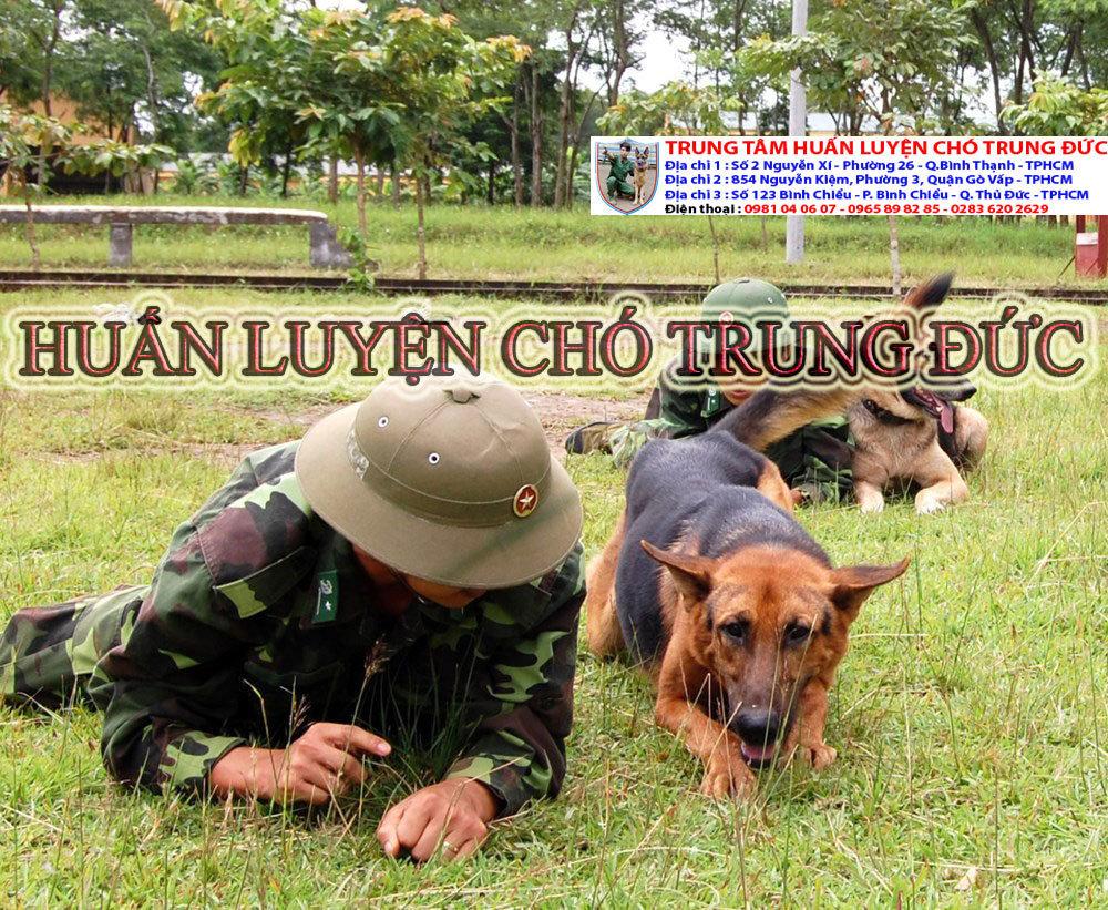 Trường huấn luyện chó nghiệp vụ Trung Đức cover