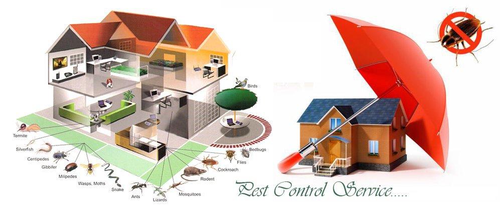 Same Day Pest Control cover