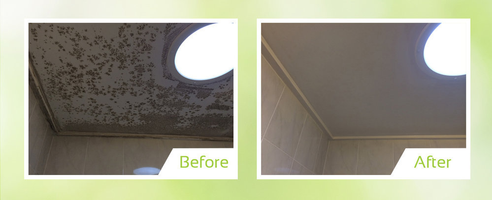 Mould Cleaning Australia cover