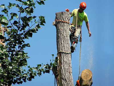 Portsmouth Tree Service cover