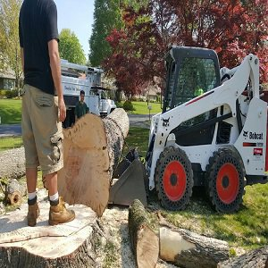 Parma Tree Service cover
