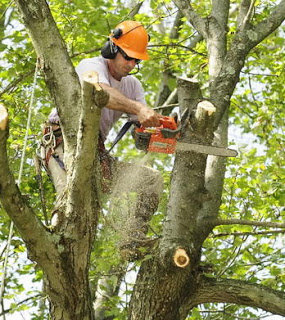 UNBEATABLE PRICED Tree Service cover