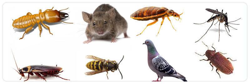 Proven Pest Control  cover