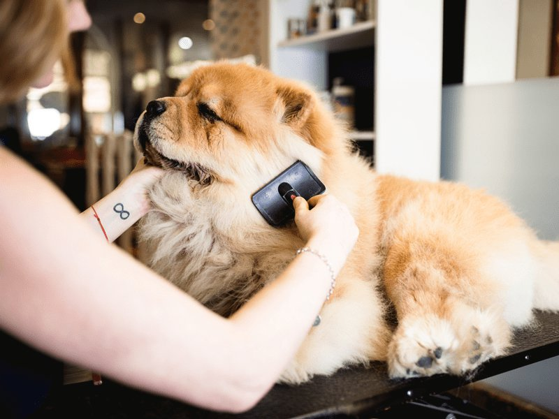 Dog Grooming cover