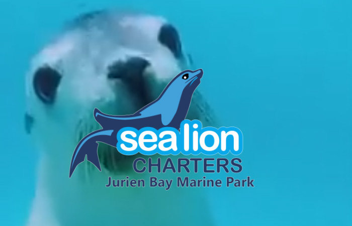 Sea Lion Charters cover