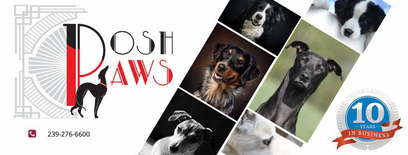 Posh PAws cover