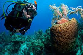 Deep Sea Fishing Turks and Caicos cover