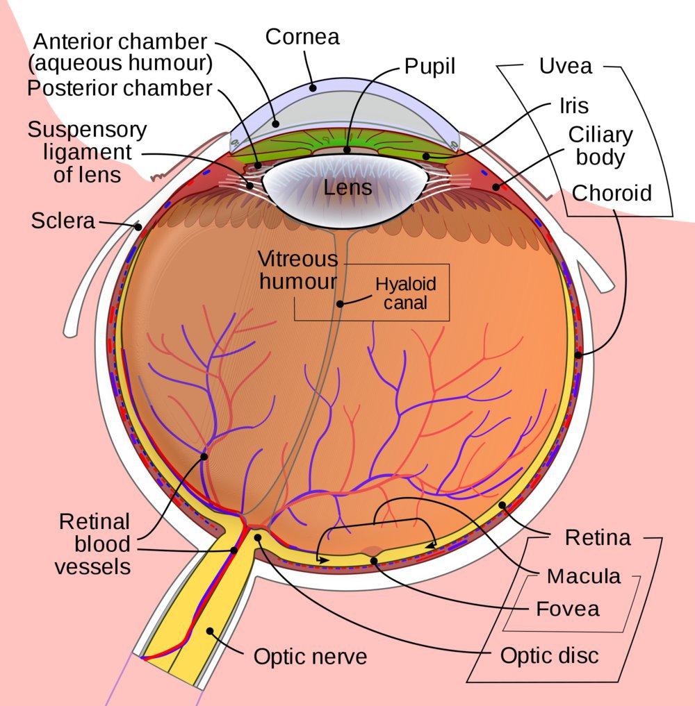 Lotus Eye Hospital cover